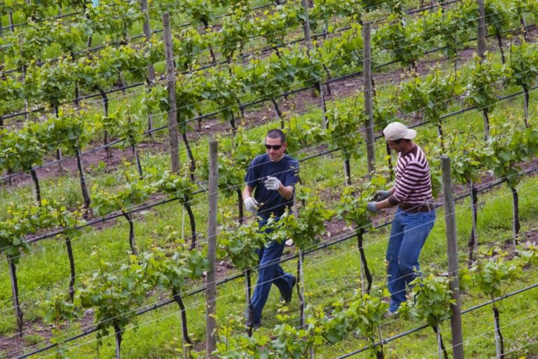 zoom vigneti vineyard 4 1 1