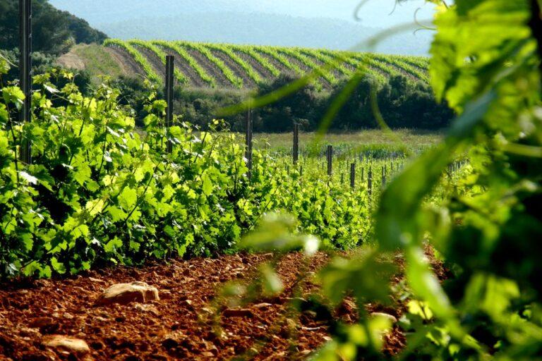 603 les vignes コピー